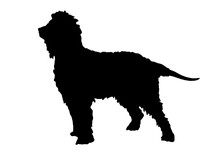 Irish Water Spaniel Dog Silhouette, Vector Illustration Silhouette Of A Dog On A White Background.
