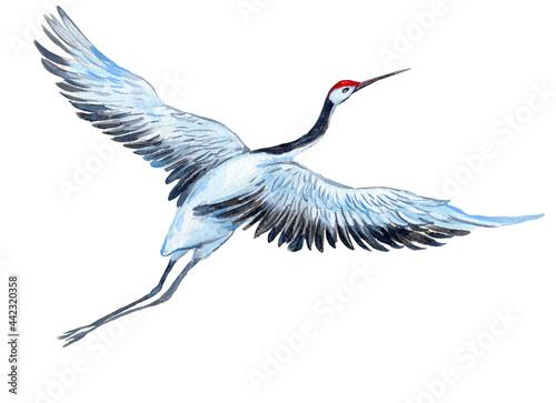 Fotografiet White crane, watercolor illustration on isolated white background