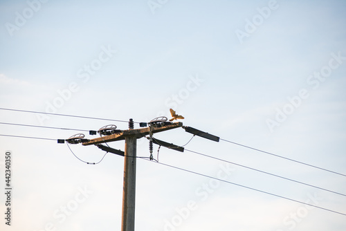Canvas Print Hawk landing on pylon late in the afternoon