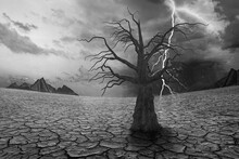Global Warming And Concept Of Drought, Environment Disaster With Dead Tree
