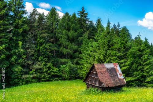 Fototapeta Old hut in green forest