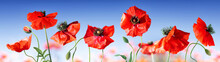 Poppies In Field With Blue Sky