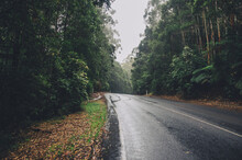 Wet Road In A Forest On Overcast Day
