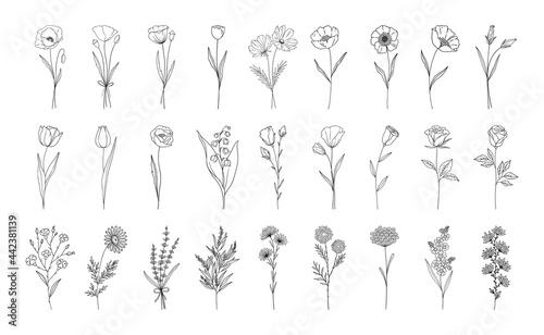 Fotografiet Floral set, line style hand drawn flowers