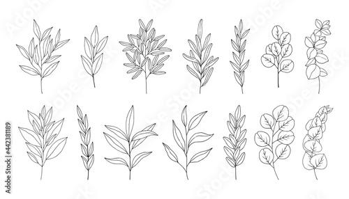 Fotografie, Obraz Leaves set, line art hand drawn branches