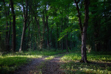 Liana Forest In Dagestan (Samursky) Is The Only Subtropical Grove In Russia