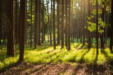 Wald Im Sommer Am Späten Nachmittag