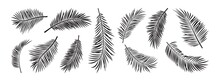 Palm Leaves Icon Vector, Exotic Branch Plant Set Isolated On White Background, Black Silhouettes Coconut And Banana Jungle. Tropical Hand Drawn Illustration