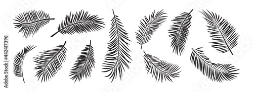 Fotografie, Obraz Palm leaves icon vector, exotic branch plant set isolated on white background, black silhouettes coconut and banana jungle