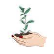 Kobiece dłonie trzymające młodą roślinę, sadzonkę. Mistyczny symbol dla kosmetyków naturalnych, eko produktów, spa, ziołolecznictwa, biżuterii, wzór na tatuaż, kartki ślubne. Ilustracja wektorowa.