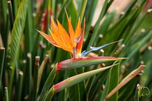 Flor Del Pájaro