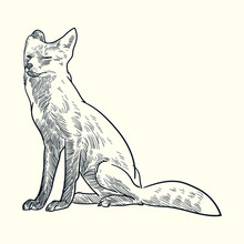 Vintage Hand Drawn Sketch Fox