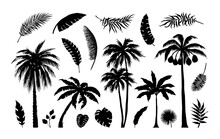 Palm Silhouette. Exotic Jungle Foliage. Tropical Trees And Branches. Black Leaves Templates. Banana Or Coconut Fronds. Isolated Summer Botanical Contour Elements. Vector Plants Set