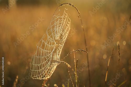 Foto Sieć pajęcza