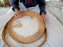 Farmer Selects The Impurity Out Off The Grain Jasmine Rice Seed By Traditional Hand Process. Rice Seeds Are Dried In The Sun After Being Harvested From Rice Fields And Milling.