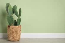 Beautiful Cactus Near Green Wall, Space For Text. Tropical Plant