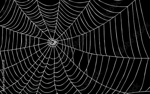 Spider web on black background with path Fototapet