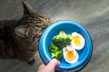 Hungry Cat And A Bowl Of Broccoli And Eggs