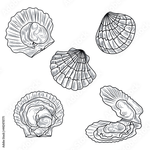 Tablou Canvas Scallops hand drawn vector set, collection of seafood, clams