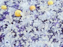 A Flower Arrangement Inspired By The Starry Night. Madagascar Jasmine, Hydrangea, And Gypsophila Elegans.