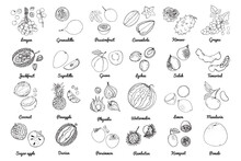 Vector Food Icons Of Fruits. Colored Sketch Of Food Products. Watermelon, Apricot, Pineapple