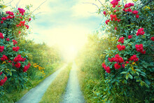 Fantasy Art Wallpaper Spring Nature. Summer Backdrop Fantasy Path, Mysterious Dirt Road, Mystical World, Fairytale Way Green Grass Trees, Bush Red Roses Magical Light Sunset. Foliage Garden Background