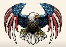 Bald Eagle With America Flag Color