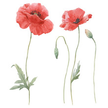 Beautiful Floral Set With Hand Drawn Watercolor Gentle Poppy Flowers. Stock Illuistration.