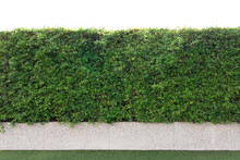 Tree Wall Fence Garden Decoration With Concrete And Glass Floor