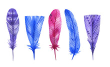 Hand Drawn Watercolor Feathers Set. Decorative Bohemian Collection.