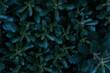 Blumenblätter in grün/blau Touch