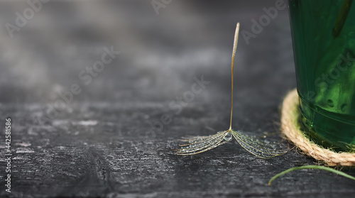 Fotografie, Obraz dandelion seed with raindrops on a black wooden background