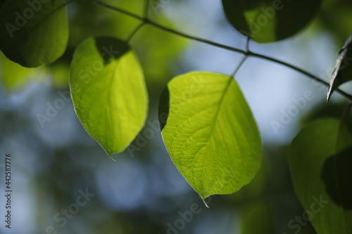 Liście zielone na niebieskim tle