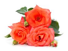 Beautiful Orange Flowers.