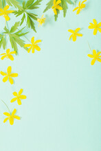 Yellow Anemone On Green  Paper Background