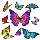 Fototapeta Motyle - B5