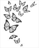 Fototapeta Motyle - B7
