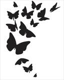 Fototapeta Motyle - B8