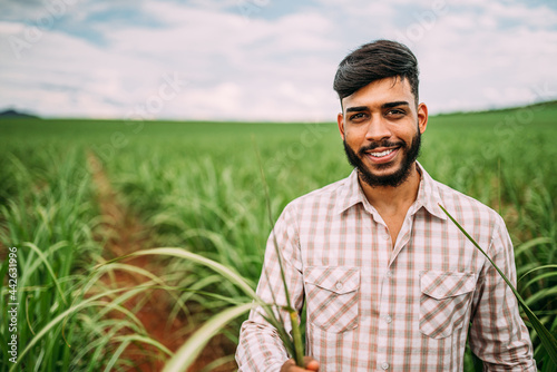 Obraz na plátně Young Latin farmer working on sugarcane plantation