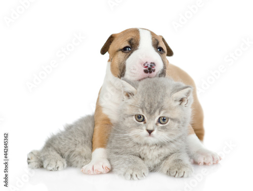 Billede på lærred Miniature Bull Terrier puppy hugs tiny kitten