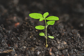The tree grows from perfect soil. agricultural concept, planting