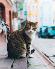 Tabby Cat Sitting On Street Pavement