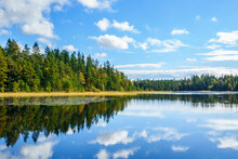 Forest Lake With Reflections In The Water