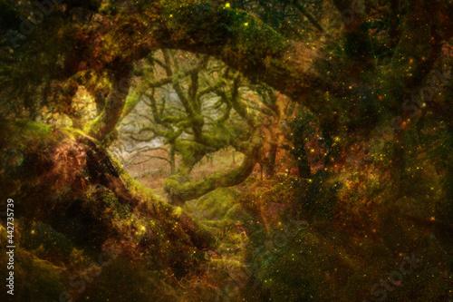 Fototapeta magic forest - Zauberwald