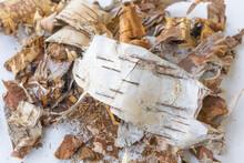 Bark Shavings Of White Birch Bark With Black Stripes Cut Off, Separated, Peeled From Wood Lies Rounded On A White Background. The Removed Top Layer Of Birch Bark Heap Close-up