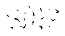 Flying Flock Birds Flight Bird Silhouettes Isolated Black Doves Seagulls Collection