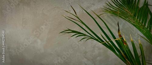 Liść palmy na tle muru