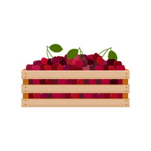 A Bright Summer Illustration Depicting A Wooden Box With Red Ripe Cherries And Green Leaves. The Harvested Harvest Of Juicy Cherries In A Box Made Of Wood. Vector Illustration On A White Background