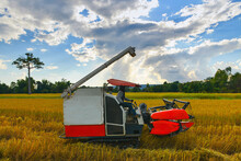 Combine Harvester Working On Ricefield.Rice Harvest