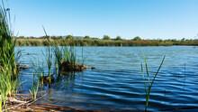 Reeds Growing In Pond In San Joaquin Marsh